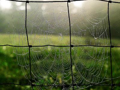 Spiderweb_1